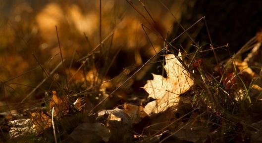 autumn_winter