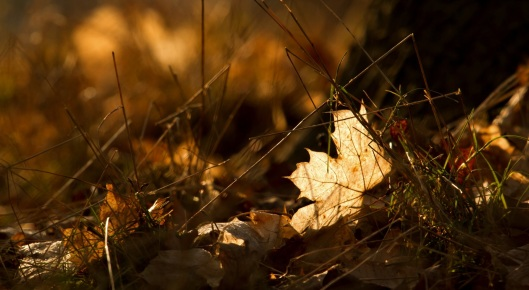 autumn_winter